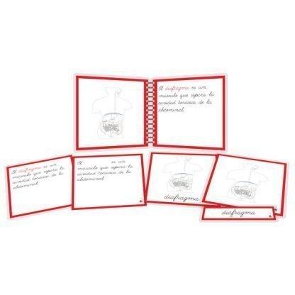Aparato digestivo - libro y nomenclatura