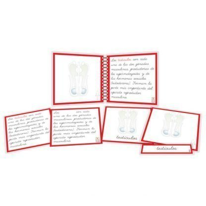 Aparato reproductor masculino - libro y nomenclatura