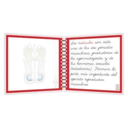 Aparato reproductor masculino - libro