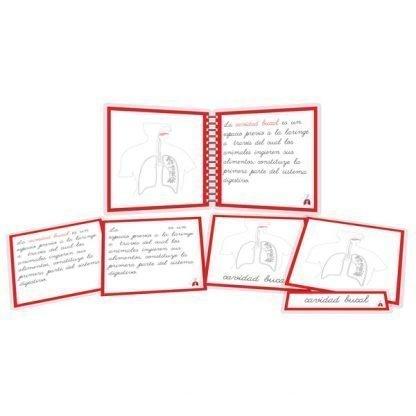 Aparato respiratorio - libro y nomenclatura