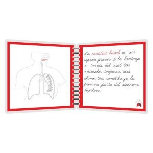 Aparato respiratorio - libro