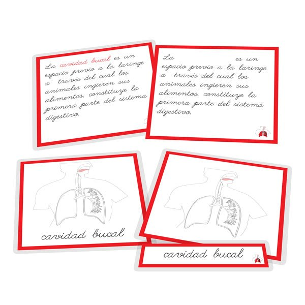 Aparato respiratorio - nomenclatura