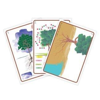 Cartelones de botánica Montessori