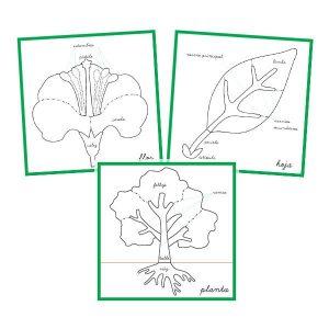 Control rompecabezas botánico