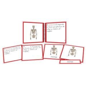 Huesos - libro y nomenclatura