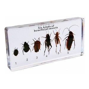 Insectos benéficos