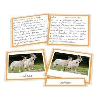 La cabra y sus derivados