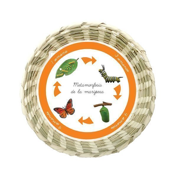 Metamorfosis Mariposa Montessori