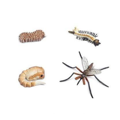 Metamorfosis del Mosquito Montessori