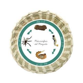 Metamorfosis Mosquito Montessori