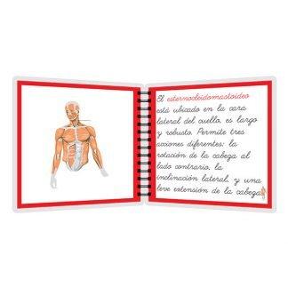 Músculos - libro