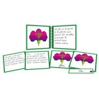 Partes de la flor - libro y nomenclatura