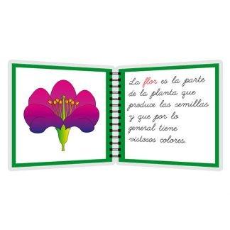 Partes de la flor - libro