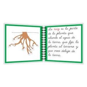 Partes de la raíz - libro