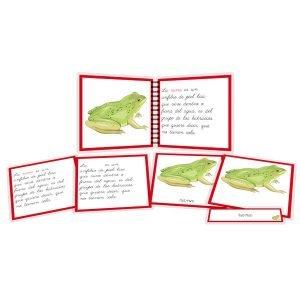 Partes de la rana - libro y nomenclatura