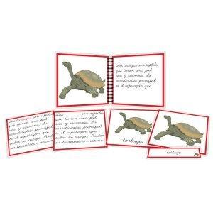 Partes de la tortuga - libro y nomenclatura