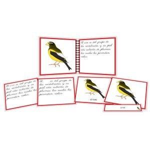 Partes del ave - libro y nomenclatura