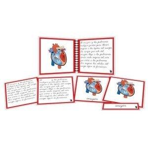 Partes del corazón - libro y nomenclatura