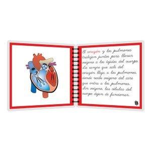 Partes del corazón - libro