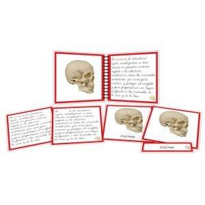 Partes del cráneo - libro y nomenclatura