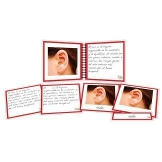 Partes del oído - libro y nomenclatura