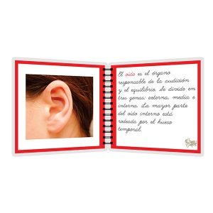 Partes del oído - libro