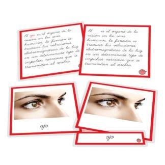 Partes del ojo - nomenclatura