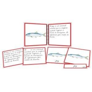 Partes del pez - libro y nomenclatura