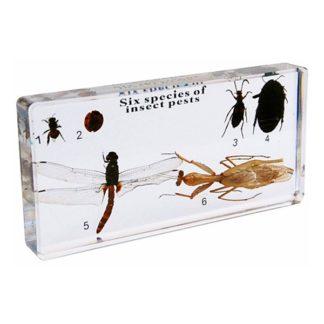 Plagas de insectos