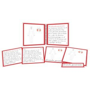 Sistema endócrino - libro y nomenclatura