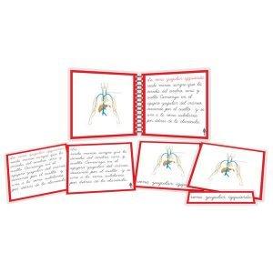 Sistema linfático - libro y nomenclatura
