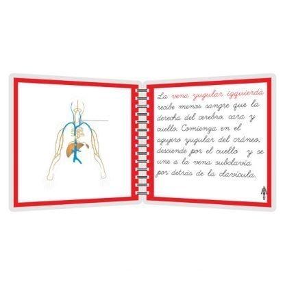 Sistema linfático - libro