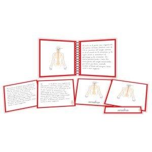 Sistema nervioso - libro y nomenclatura