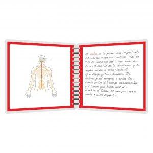 Sistema nervioso - libro