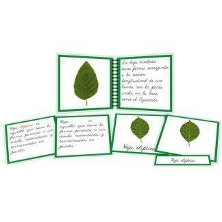 Tipos de hojas - libro y nomenclatura