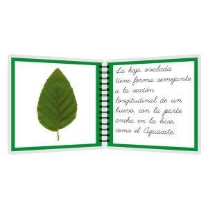 Tipos de hojas - libro