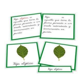 Tipos de hojas - nomenclatura
